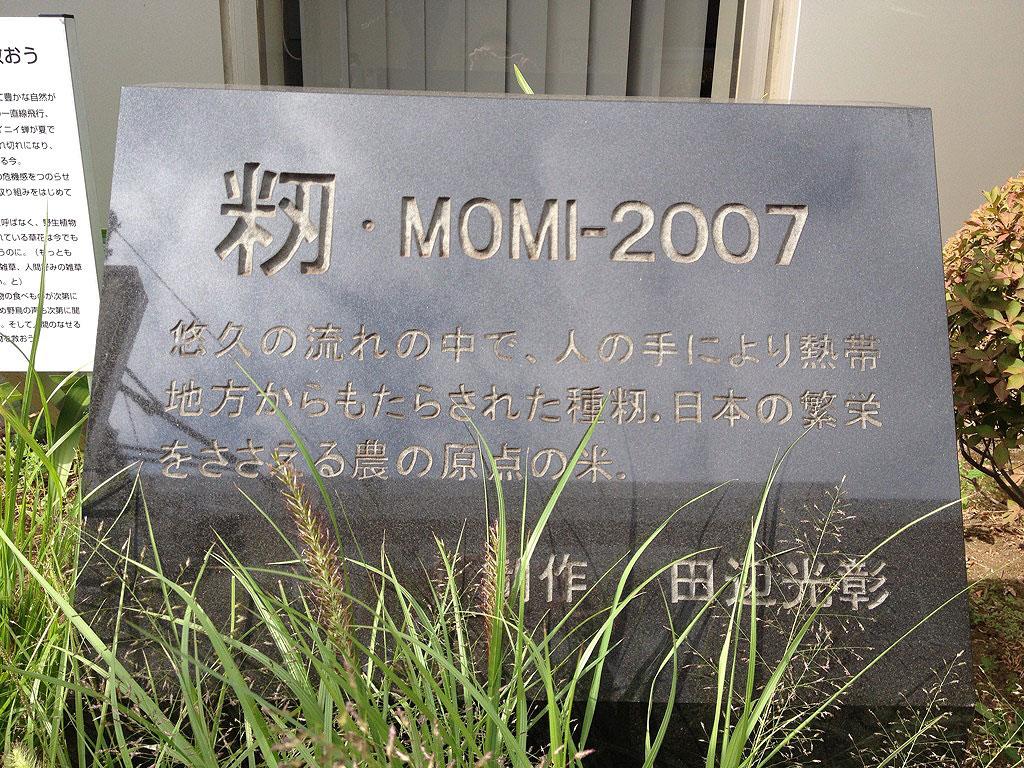 Tama_momi2