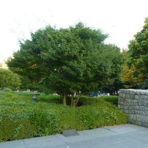 """オノ・ヨーコ / 東京のウィッシュ・ツリー(願かけの木) """"Wish Tree for Tokyo"""""""