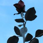 """イザ・ゲンツケン / 薔薇 """"Rose"""""""